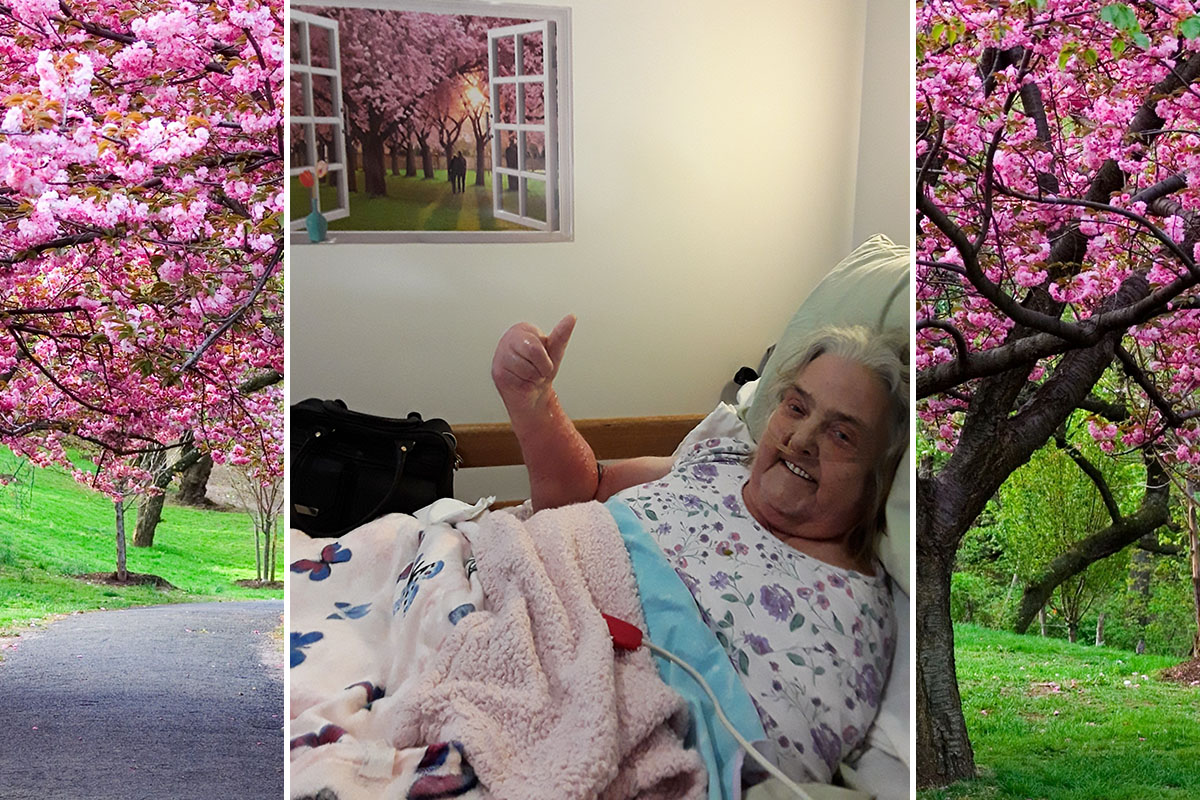 Cherry blossoms for Daphne at Hengist Field Care Home