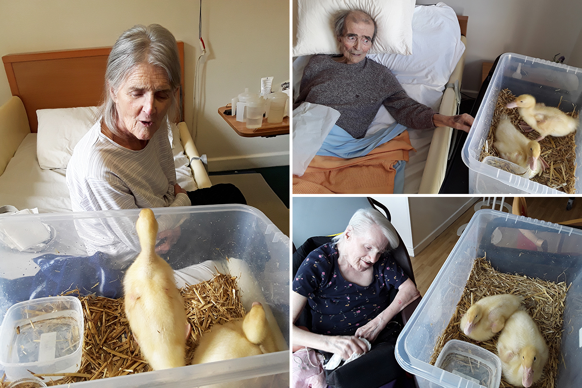 Ducks return for a visit to Hengist Field Care Home