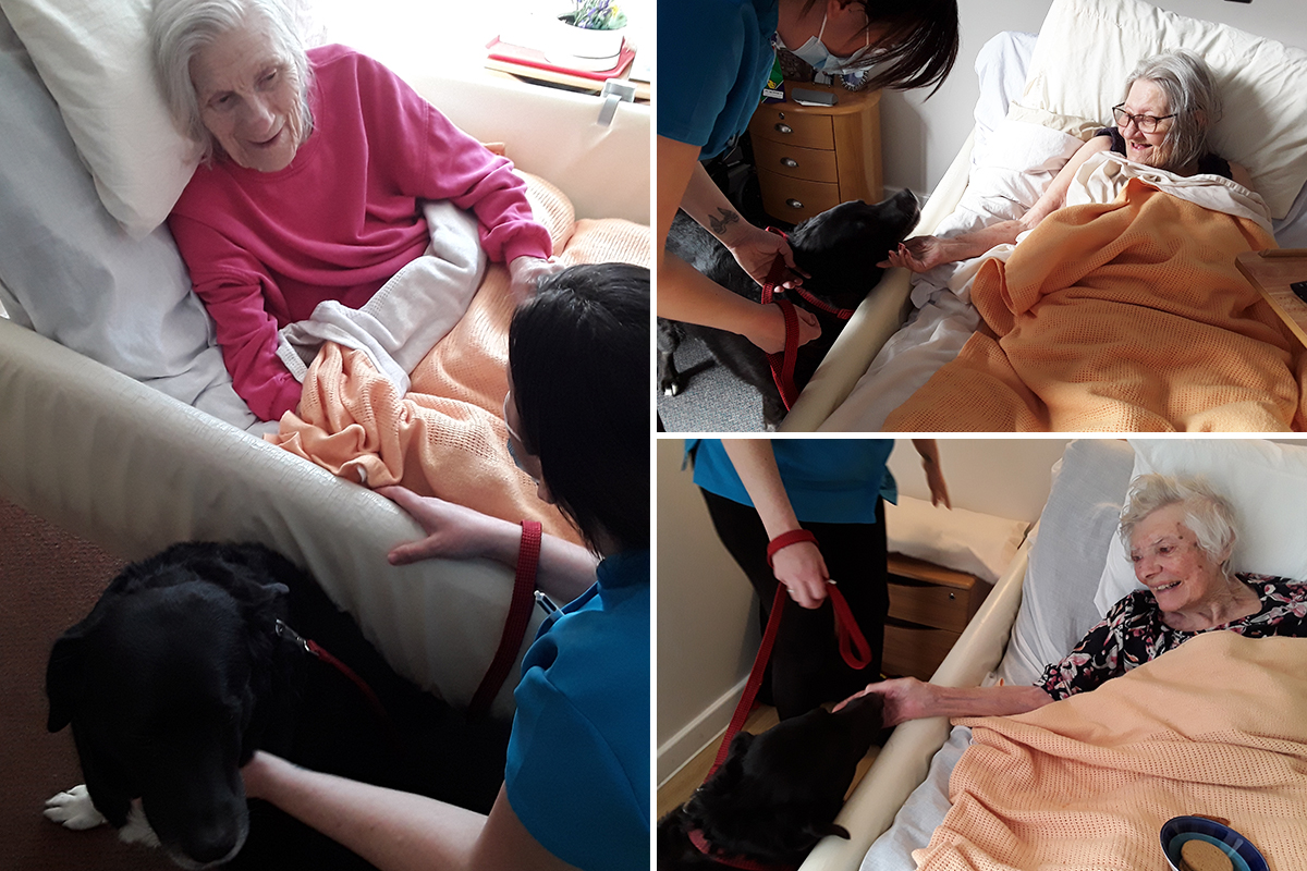 Pet Therapy dog Bo visits Hengist Field Care Home